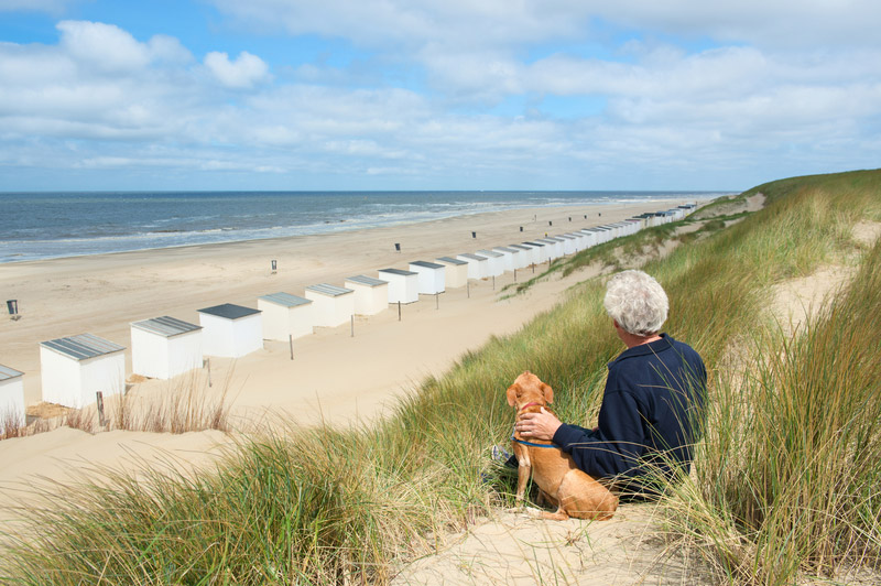 Hundestrande In Holland Ferienhaus Holland