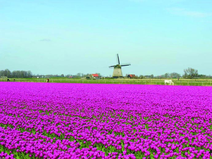 Das Wetter In Holland Von Maritimen Einflüssen Geprägt